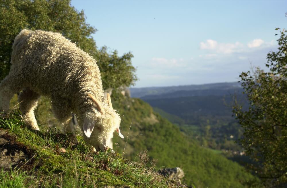 falaise-quercy-causse-tourisme-vallee-dordogne