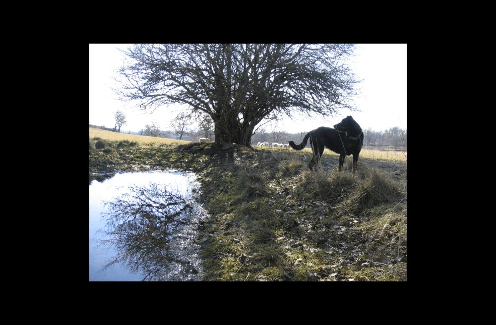 Berger de Beauce - La ferme de Siran à Loubressac